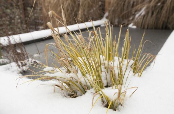 Jak przygotować oczko wodne na zimę?