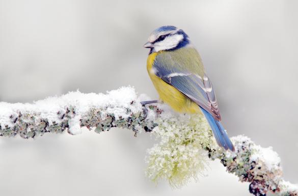 Ptaki to naturalni sprzymierzeńcy w...