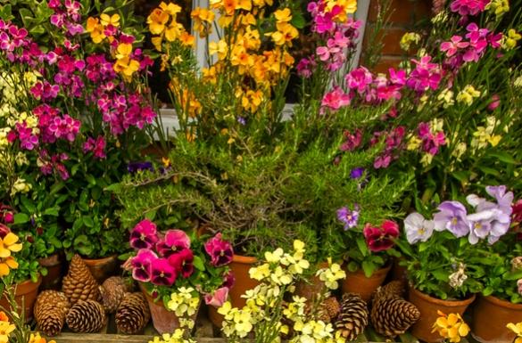 Sierpień w ogrodzie - kalendarz prac...