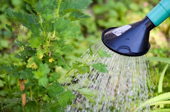 Jak należy podlewać rośliny w...