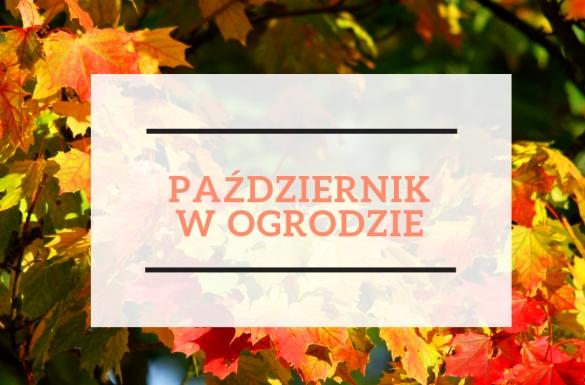 Październik w ogrodzie, część 1