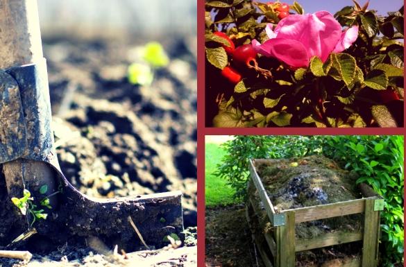 Październik w ogrodzie, część 2