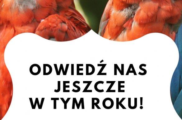 """Przerwa zimowa w Ptaszarni """"Ptaki..."""