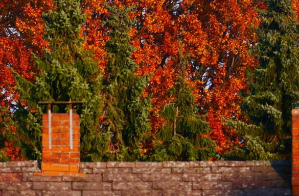 Listopad w ogrodzie, część 3