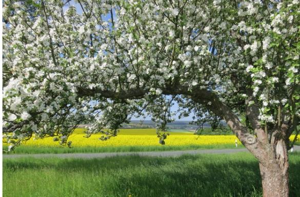 Kwiecień w ogrodzie, część 1