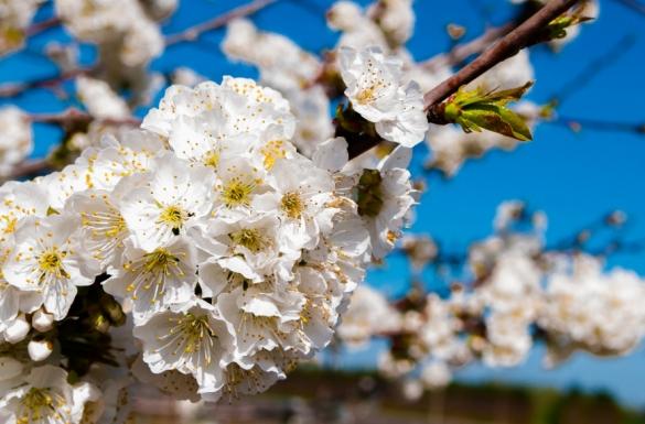 Kwiecień w ogrodzie, część 3