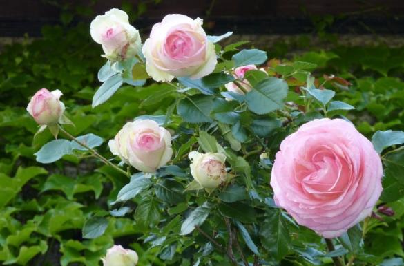 Kwiecień w ogrodzie, część 6
