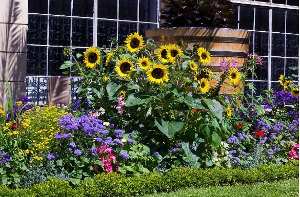 Ogród w lipcu