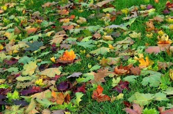 Październik w ogrodzie.